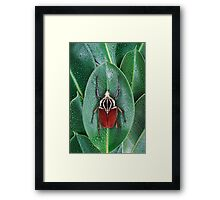 Beetle_Goliathus_goliatus Framed Print