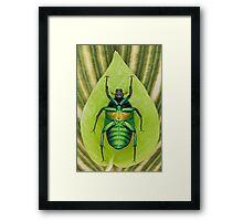 Beetle_Rhomborrhina_resplendens Framed Print
