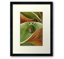 Beetle_Stephanorrhina_guttata Framed Print