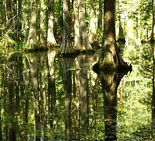 Cypress Canopy Water Reflection by ishotit4u