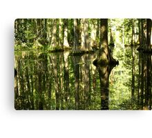 Cypress Canopy Water Reflection Canvas Print