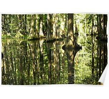 Cypress Canopy Water Reflection Poster