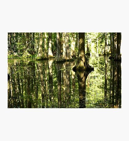 Cypress Canopy Water Reflection Photographic Print