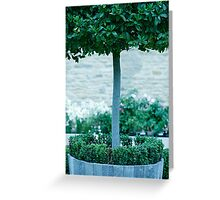 Topiary Detail Greeting Card