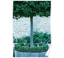 Topiary Detail Poster