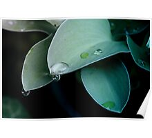 Leaves with drops Poster