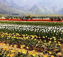Oil Painting - Rows of tulips along with visitors by ashishagarwal74