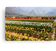Oil Painting - Rows of tulips along with visitors Canvas Print