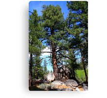 Tree thru the rocks,Peavine Mountain,Reno Nevada USA Canvas Print