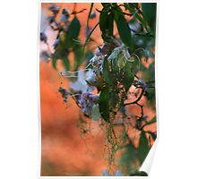 Rhododendron Mist  Poster