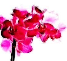 Fractalius pink orchid by shalisa