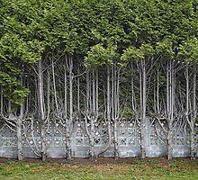 Cedar Hedge Detail by Paul Eekhoff