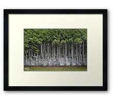 Cedar Hedge Detail Framed Print
