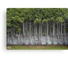 Cedar Hedge Detail Canvas Print