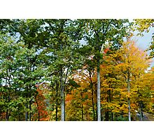 Fall Foliage at Mountain Air North Carolina Photographic Print