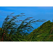 Hawaii Grasses Photographic Print