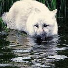 Wolf on the water by Alan Mattison IPA