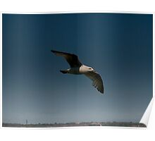 Gull Over the Town Poster