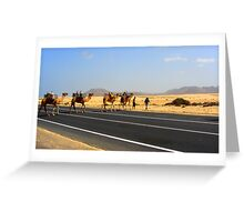 Corralejo Camels Greeting Card