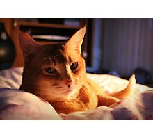 Cute Cat Photographic Print