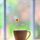 a cup of flower.. by JOSEPHMAZZUCCO