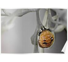 Ladybug Pupa Poster