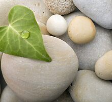 Heart leaf pebbles background by kvvpst