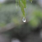 The Dew of Love by Michelle Chapa