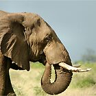 THE AFRICAN ELEPHANT IN PROFILE – Loxodonta Africana - AFRIKA OLIFANT by Magaret Meintjes