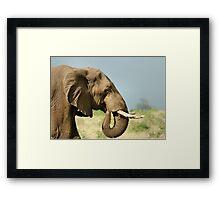 THE AFRICAN ELEPHANT IN PROFILE – Loxodonta Africana - AFRIKA OLIFANT Framed Print