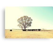 A Cow, A Tree and Some More Cows  Canvas Print