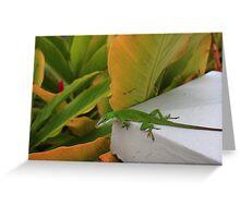 Green gecko Greeting Card