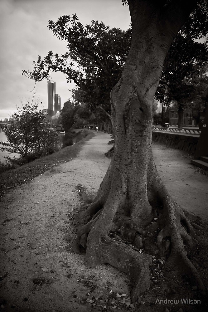Yarra River Trail by Andrew Wilson
