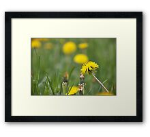 Bright sparks Framed Print