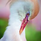 Pretty in Pink.. by Tracie Louise