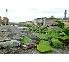 ivy by the arno Photographic Print