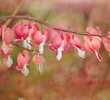 dramatic dicentra by Teresa Pople
