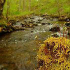 Moss on Log on Stream by Chad Burrall