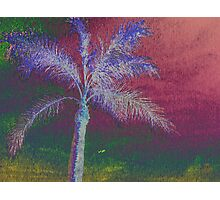 Nature on Acid - Photography Art Print Photographic Print