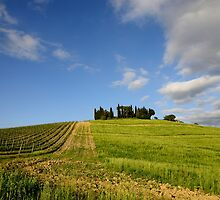 Vineyards in Tuscany by maumar70