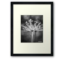 Swirls and Flower  Framed Print