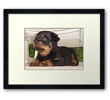 Cute Faced Rottweiler Puppy Side View Framed Print