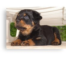 Cute Faced Rottweiler Puppy Side View Canvas Print