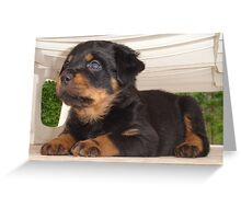 Cute Faced Rottweiler Puppy Side View Greeting Card