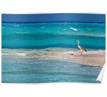 Heron, Maldives Poster