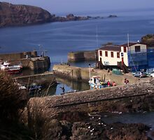 Misty Sunrise at St. Abbs Harbour, Scottish Borders by Miles Gray