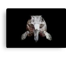 Ophthalmosaurus Canvas Print