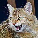 ggggggrrrrrrrrrrrrr , miauw ! by annet goetheer