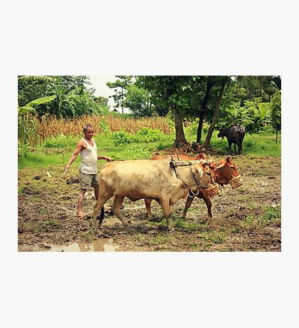 Nepalese Farmer Photographic Print