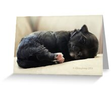 How Cute is this? Greeting Card
